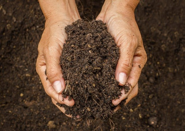 Would you want a compost funeral? (Photo: Shutterstock)