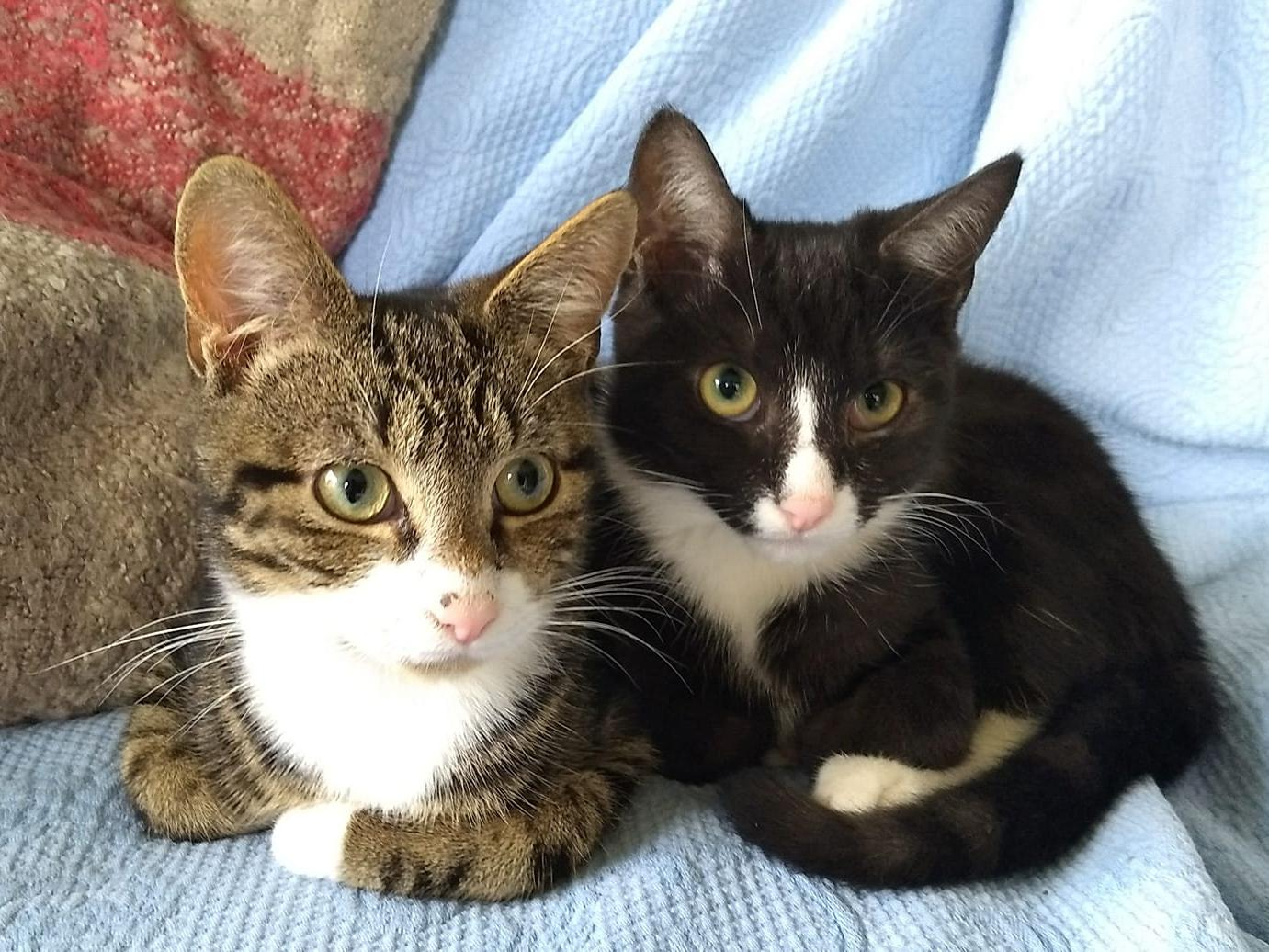 Leeds Cat Rescue 'desperate' for donations to keep up with demand