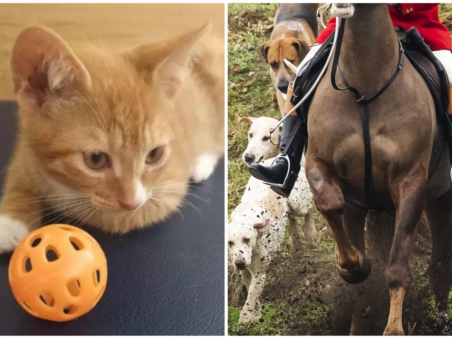 Eight-month-old kitten 'ripped to pieces' by dogs on Christmas hunt in Leeds
