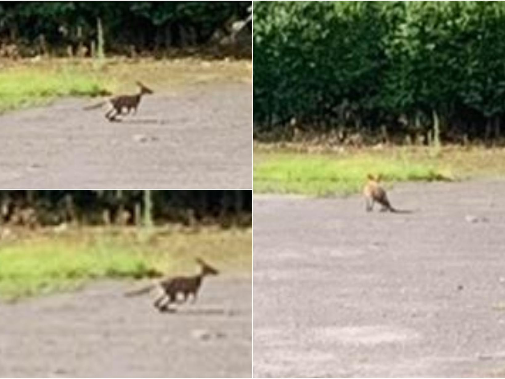 Mystery as 'kangaroo' spotted in Leeds pub car park by hair salon owner