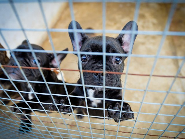 Don't get Dogfished: How to spot the signs of puppy scams online