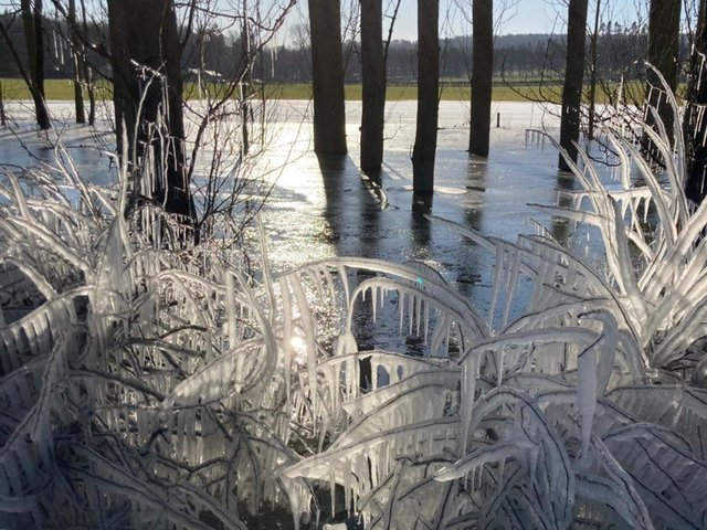 Ice crystals forming in Harewood this week as the Met Office issues a weather warning (Photo: Chloe Holt @ChloeHoltArt)