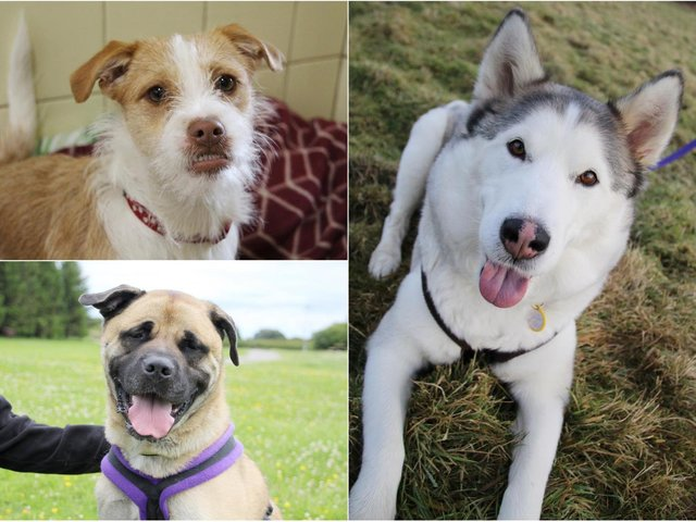 Bess (top left), Charlie (bottom left) and Nova (right) are looking for new homes in Leeds (photos: Leeds Dogs Trust)