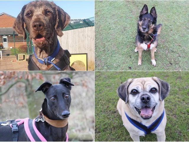 Bear, Jasmine, Lady and Pearl (photos: Leeds Dogs Trust)