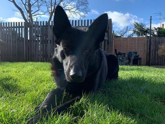 PD Shadow (photo: West Yorkshire Police)
