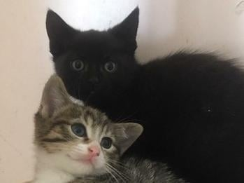 Midnight and Molly (Photo: Leeds Cat Rescue)