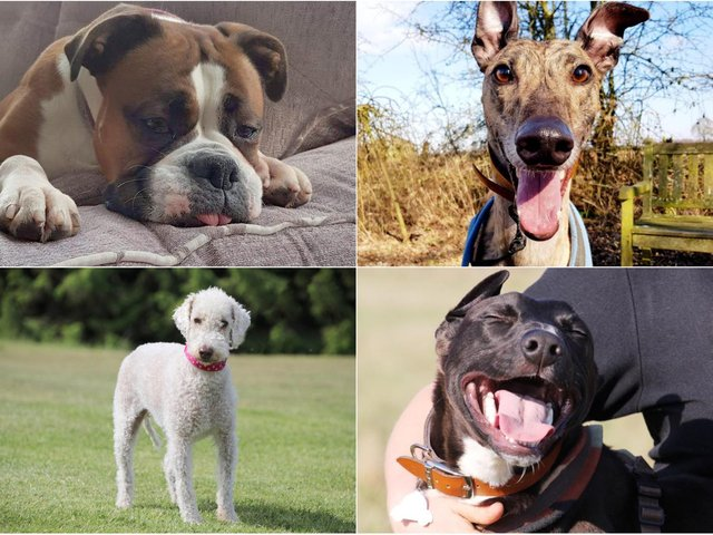 Dogs Trust in Leeds has a number of dogs up for adoption this March (photos: Dogs Trust Leeds)