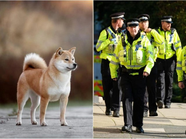 Dog thefts have surged during the pandemic