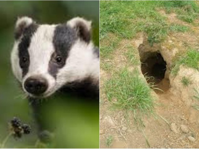 Residents have been left in shock after a large log was set on fire and placed at the entrance of a badger sett in Leeds.