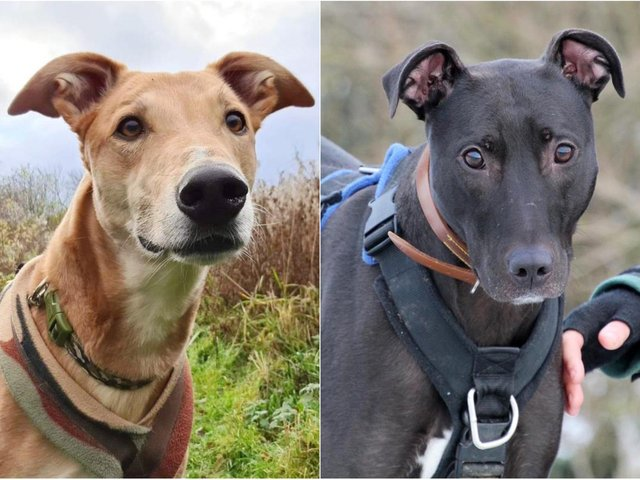 Jake, left, and Lyle, right, are at Dogs Trust Leeds and are looking for new homes.