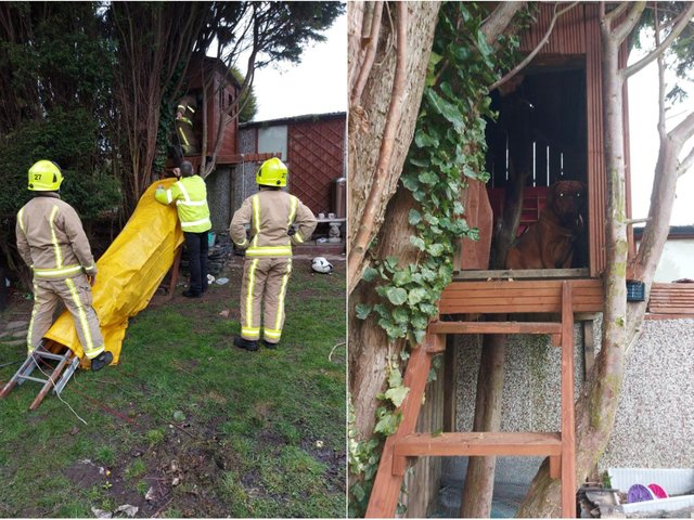 Firefighters rescuing the dog from a treehouse in Tingley (photo: West Yorkshire Fire and Rescue Service).