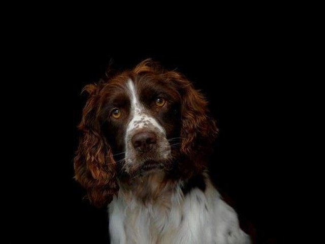 Dog Thefts have surged in the UK