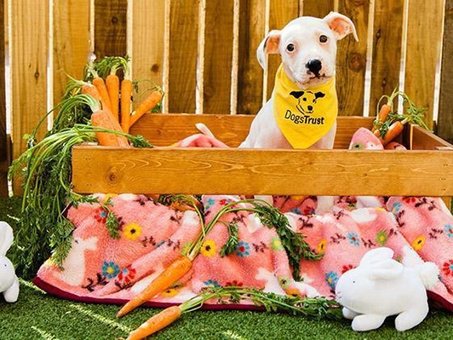 Dogs Trust Leeds Easter warning