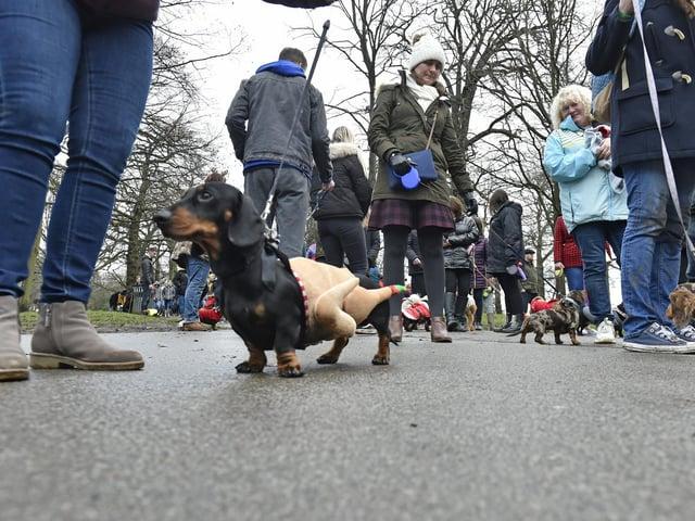 A daschund walk at Roundhay Park in 2019.