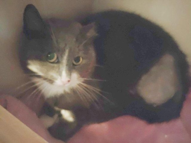 This feral cat had to have £1,000 of surgery which has left Leeds Cat Rescue in urgent need of funds