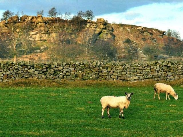 Sheep in Yorkshire (file photo).