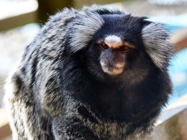 The RSPCA rescued six monkeys from a home in Bradford where they were being kept as pets.
