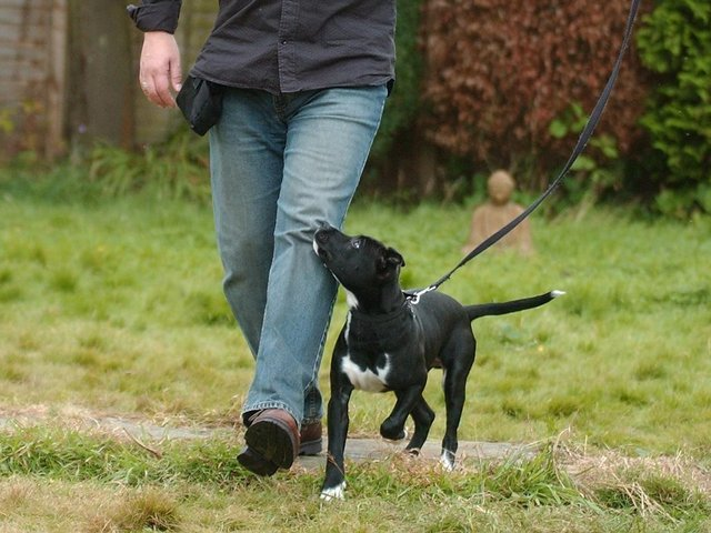 A total of 150 dogs were stolen in West Yorkshire between January 2020 and February 2021.