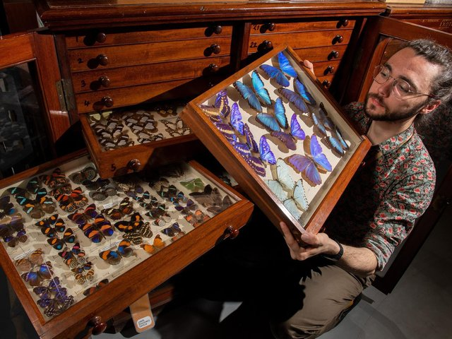 Curator Milo Phillips who is running a project to empower women in science with Leeds Discovery Centre's insect collection (photo: Bruce Rollinson)