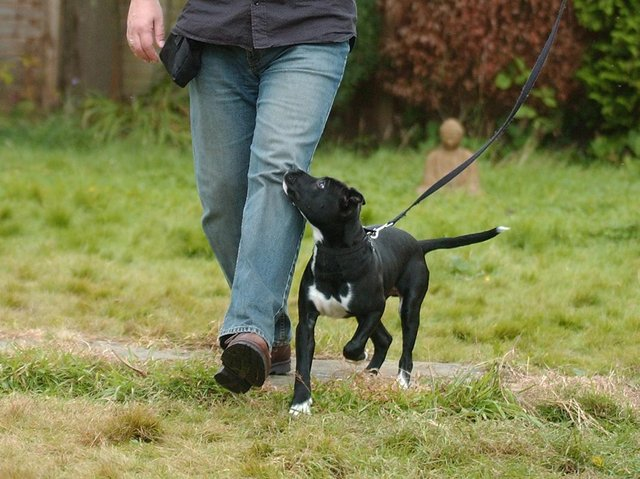 DogLost, a UK charity that helps victims of dog theft, recorded a 170% increase in the crime, from 172 dogs reported stolen in 2019 to 465 in 2020.