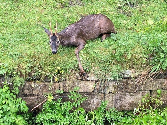 West Yorkshire Fire and Rescue Service saved the deer