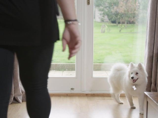 photo: Dogs Trust