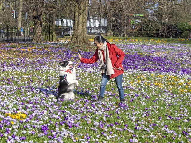 A hotel in Otley has been named as one of the top dog-friendly hotels in Leeds.
