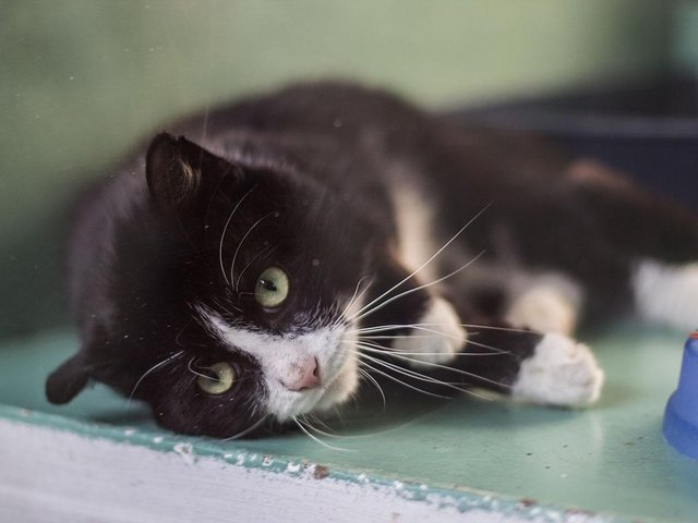Concerns have been raised after three cats were found beheaded in Leeds and West Yorkshire. STOCK photo of cat, not related to incidents.