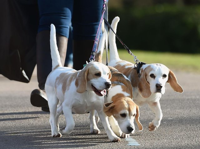 The number of dog thefts reported to police rose last year amidst a lockdown boom in pet sales