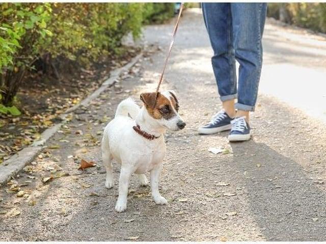 Dog walks near Leeds