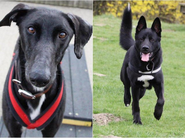 Dogs Trust Leeds is home to plenty of pups looking for the perfect family.