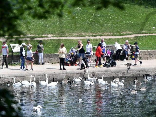 Roundhay Park in the sun (photo: Simon Hulme)