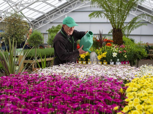 Tong Garden Centre has been given the go-ahead to build a site in Tingley. Pictured: Joe Appleyard  plant supervisor, waters the argyranthemums at Tong Garden Centre