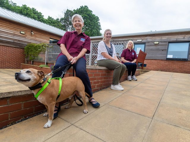 Elaine Murthick -  holding Marshall, a Staffordshire Bull Terrier. Looking on are Sally Balmforth and Sue Sykes.  Photo: James Hardisty