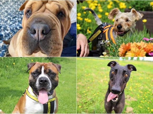 photos: Dogs Trust Leeds