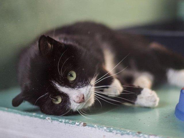 While the centre in Morley has been closed to visitors since last March, volunteers and staff have continued to care for cats in need, ensuring they are happy, healthy and ready for rehoming, before waving them off as they go to their new forever homes.