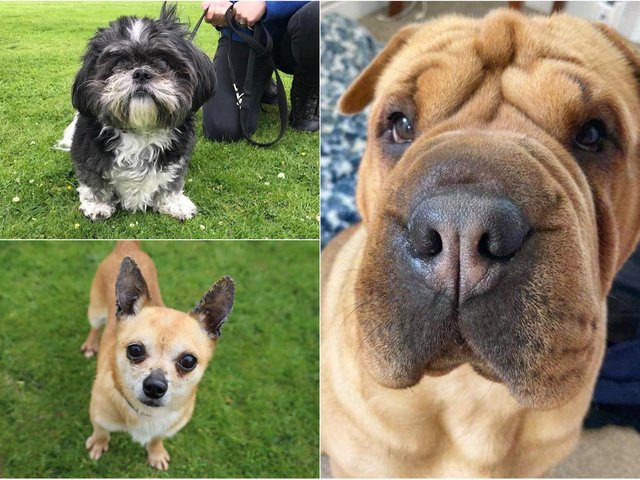 Some of the new pooches at Dogs Trust in Leeds