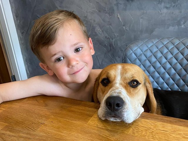 Three year old Archie Vaughan with Bella the Beagle.